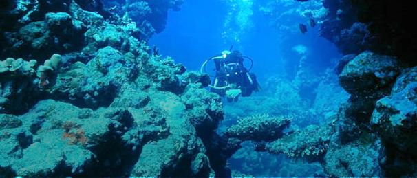 AGAflex podwodny świat